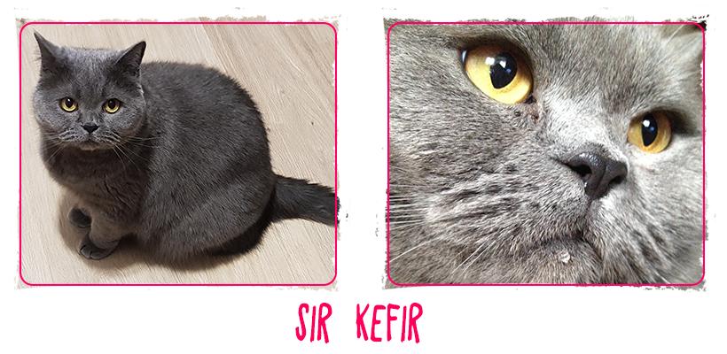 Kefir(2).png